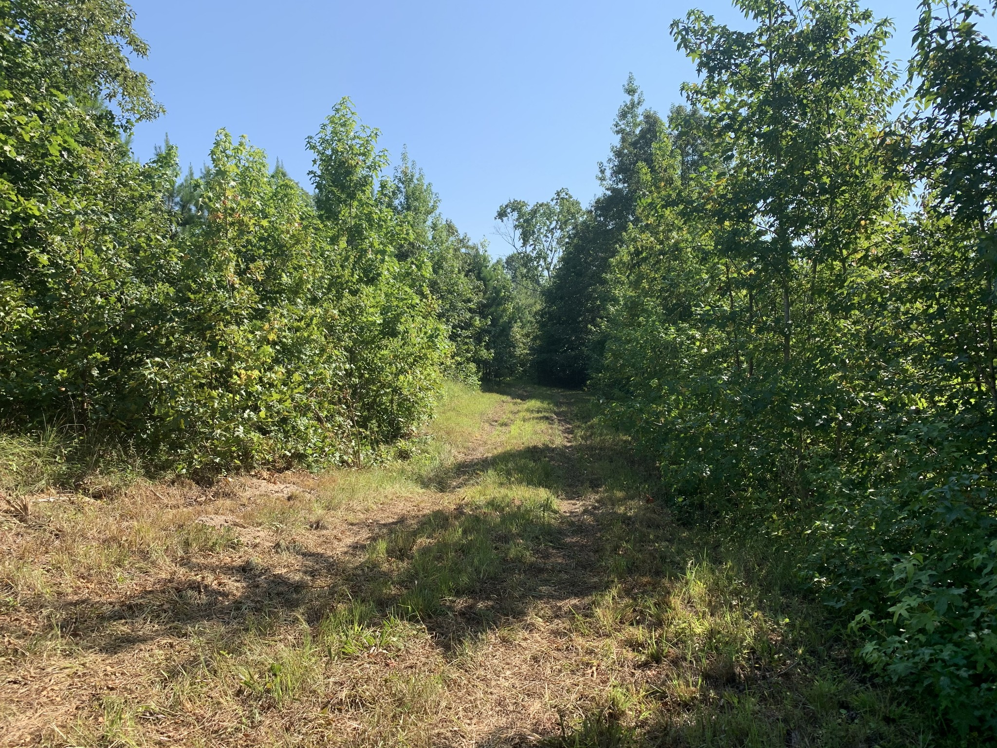 0 Little Texas Rd, Leoma, Tennessee 38468, ,Farm And Agriculture,For Sale,0 Little Texas Rd,2177217