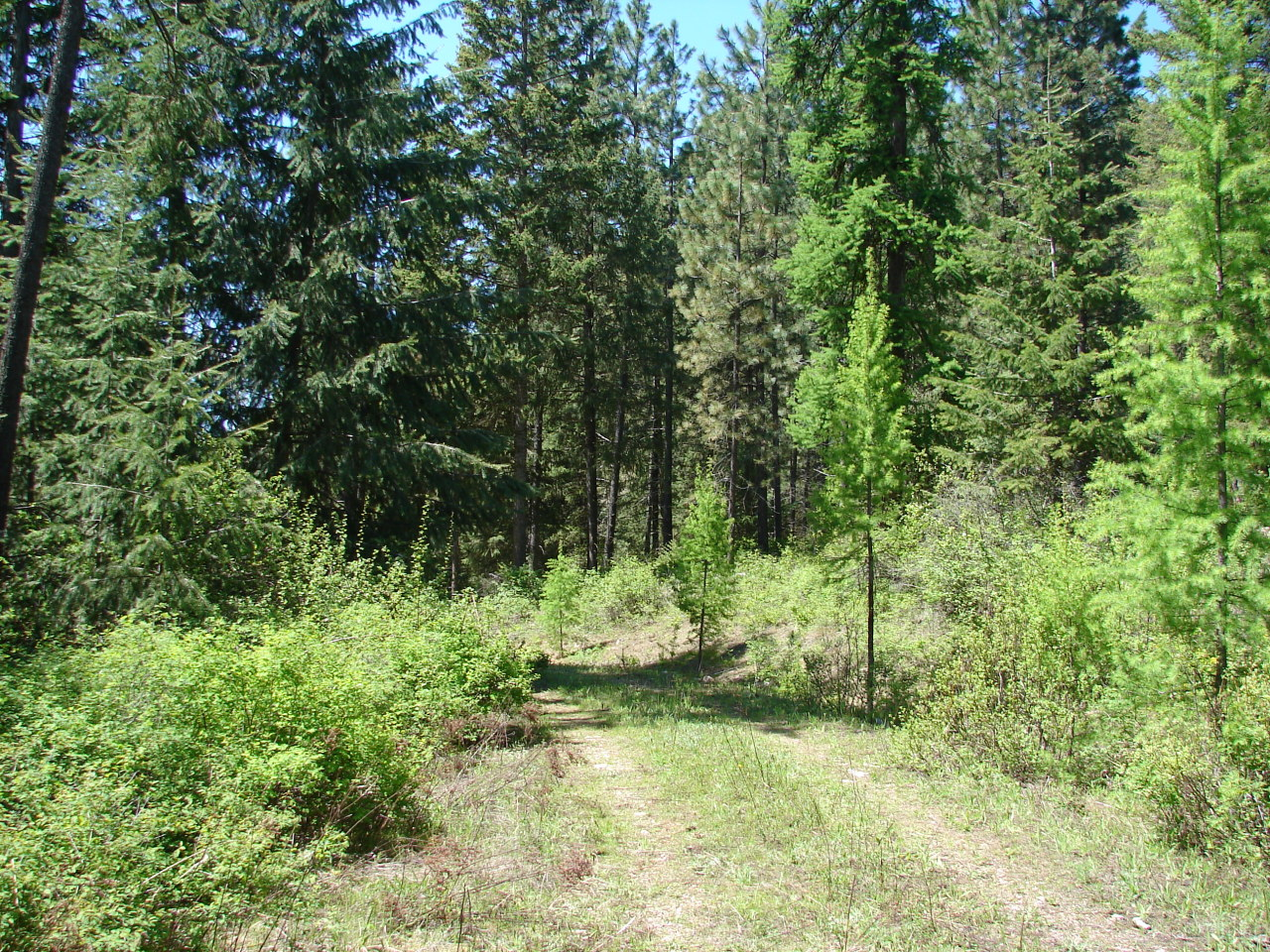 2501 HIGHLINE RD, CHEWELAH, Washington 99109, ,Lots And Land,For Sale,2501 HIGHLINE RD,38929