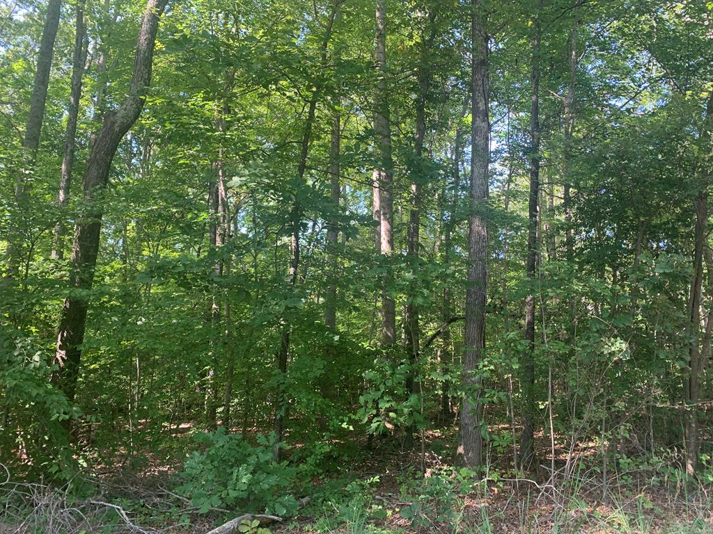 5.23 Ac Old Cox Road, Boydton, Virginia 23917, ,Lots And Land,For Sale,5.23 Ac Old Cox Road,63884