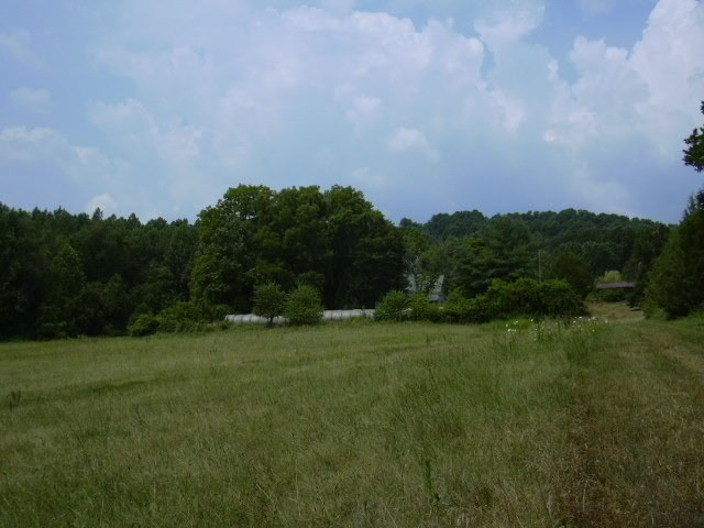 0 SHELBY RD, MADISON, Virginia 22727, ,Lots And Land,For Sale,0 SHELBY RD,608411