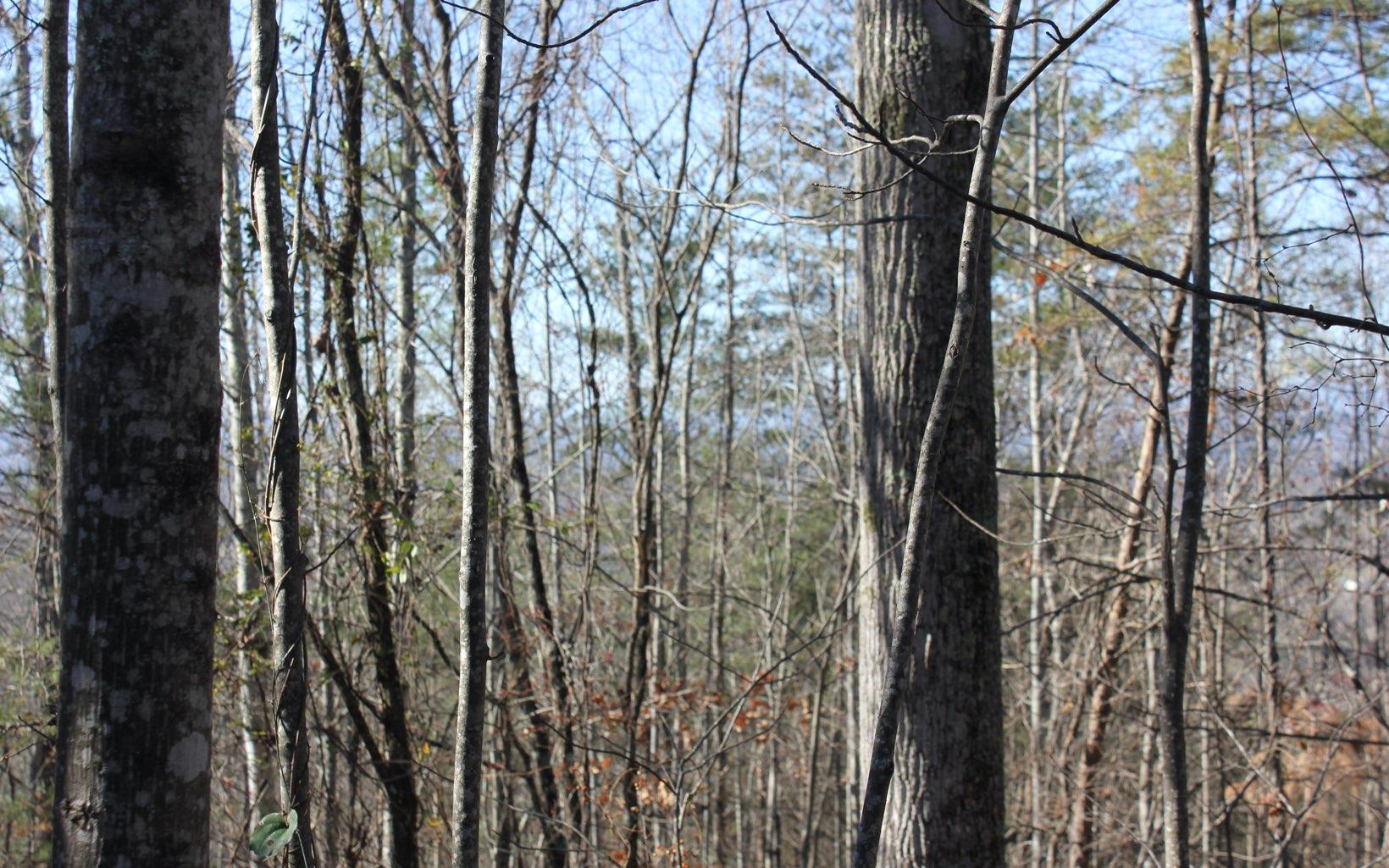 102 DEJUNCO TRAIL, Blairsville, Georgia 30512, ,Lots And Land,For Sale,102 DEJUNCO TRAIL,302831