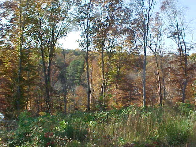 0 Richmond Hill Road, Warsaw, Virginia 22572, ,Lots And Land,For Sale,0 Richmond Hill Road,87396