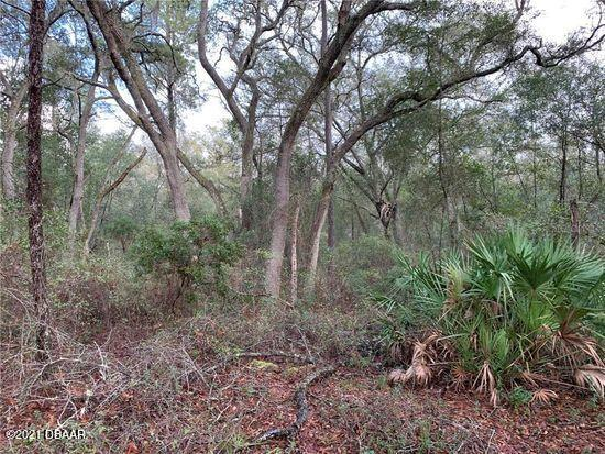 6155 State Road 11, DeLeon Springs, Florida 32130, ,Lots And Land,For Sale,6155 State Road 11,1081016
