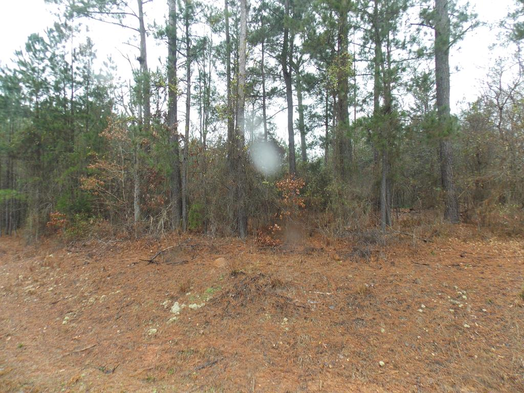 41 Remsen Road, Lincolnton, Georgia 30817, ,Lots And Land,For Sale,41 Remsen Road,452280