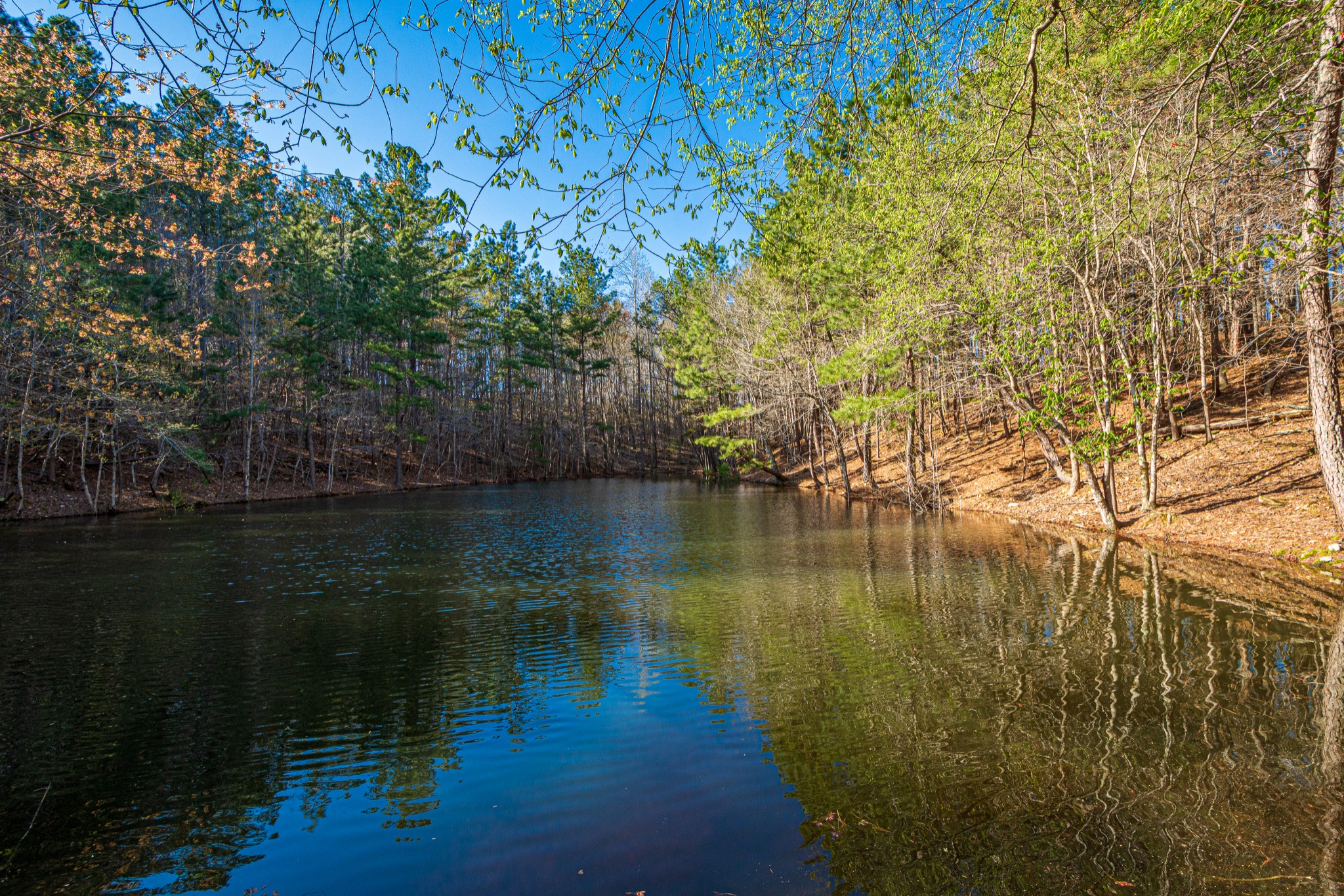 0 Pleasant Ridge Rd, Goodspring, Tennessee 38460, ,Lots And Land,For Sale,0 Pleasant Ridge Rd,2240799