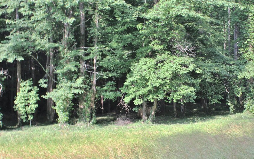 Mulberry Trail, Ellijay, Georgia 30540, ,Lots And Land,For Sale,Mulberry Trail,285398