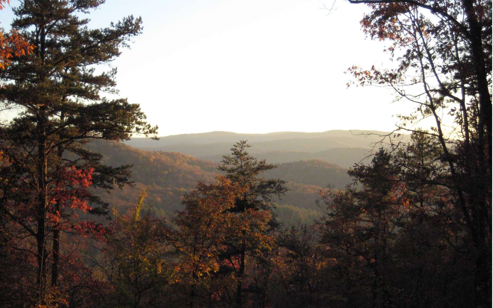 Tanager Trail, Ellijay, Georgia 30536, ,Lots And Land,For Sale,Tanager Trail,8588536