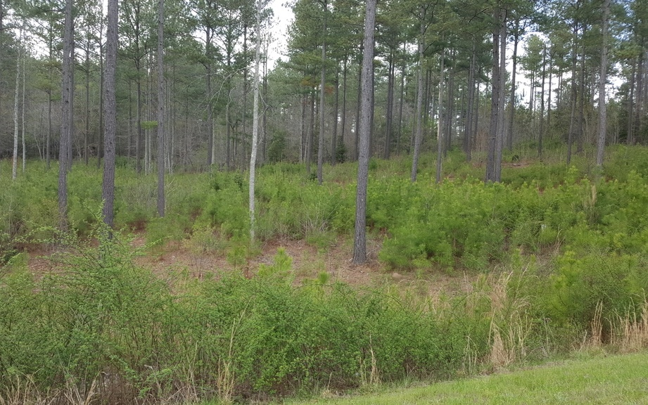 LT126 Northshore, Blairsville, Georgia 30512, ,Lots And Land,For Sale,LT126 Northshore,287598
