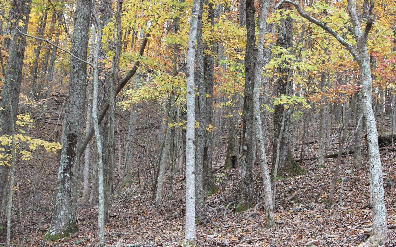 L107 Skyview Drive, Ellijay, Georgia 30540, ,Lots And Land,For Sale,L107 Skyview Drive,284120