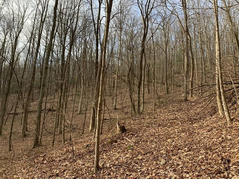 Paramount Trail, Ellijay, Georgia 30536, ,Lots And Land,For Sale,Paramount Trail,6663127