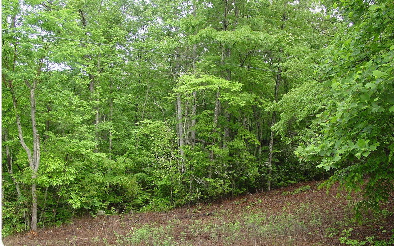 LOW GAP ROAD, Hayesville, North Carolina 28904, ,Lots And Land,For Sale,LOW GAP ROAD,278157